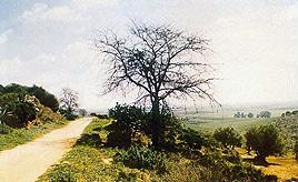 V.V. de Los Alcores