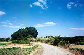 V.V. del Campo de Borja